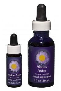 Alpine Aster