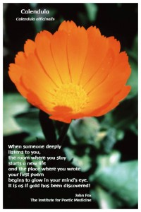 Flower Photo Print - Calendula